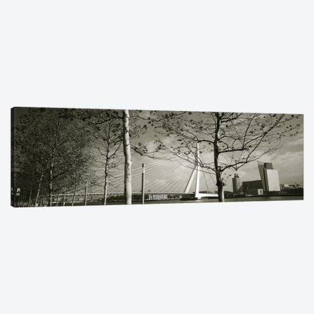 Erasmus Bridge Seen Through Tree Branches In B&W, Rotterdam, South Holland, Netherlands Canvas Print #PIM4250} by Panoramic Images Canvas Wall Art