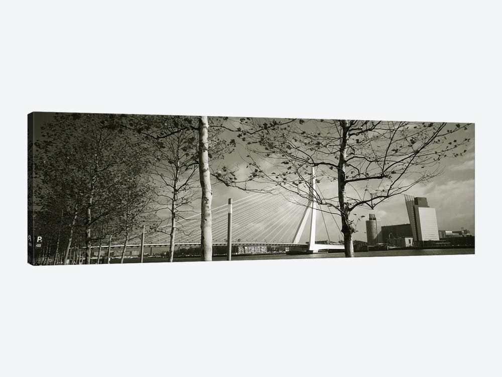 Erasmus Bridge Seen Through Tree Branches In B&W, Rotterdam, South Holland, Netherlands by Panoramic Images 1-piece Canvas Artwork