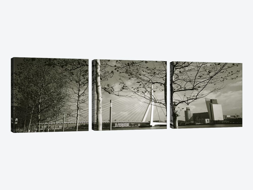 Erasmus Bridge Seen Through Tree Branches In B&W, Rotterdam, South Holland, Netherlands by Panoramic Images 3-piece Canvas Artwork