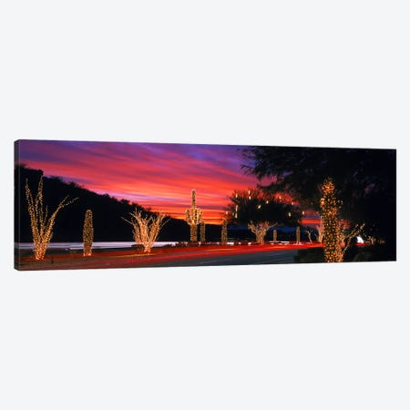 Christmas Lights On Roadside Cacti & Trees, Phoenix, Arizona, USA Canvas Print #PIM4265} by Panoramic Images Canvas Wall Art