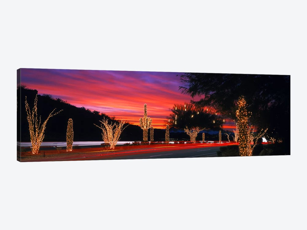Christmas Lights On Roadside Cacti & Trees, Phoenix, Arizona, USA by Panoramic Images 1-piece Canvas Wall Art