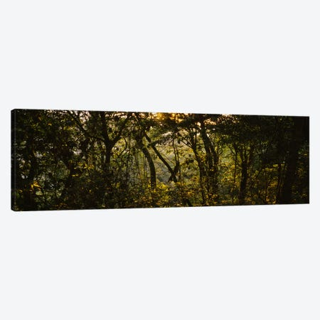 Sunset over a forest, Monteverde Cloud Forest, Costa Rica Canvas Print #PIM4272} by Panoramic Images Canvas Art