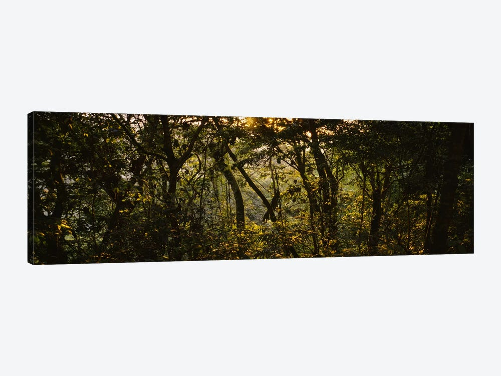 Sunset over a forest, Monteverde Cloud Forest, Costa Rica 1-piece Canvas Art