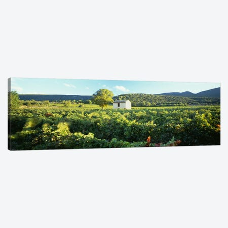 Vineyard Provence France Canvas Print #PIM4303} by Panoramic Images Canvas Artwork