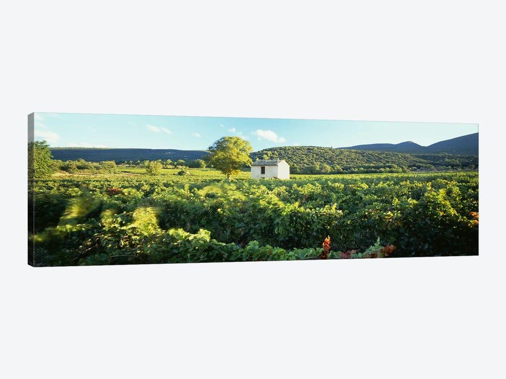 Vineyard Provence France by Panoramic Images 1-piece Art Print
