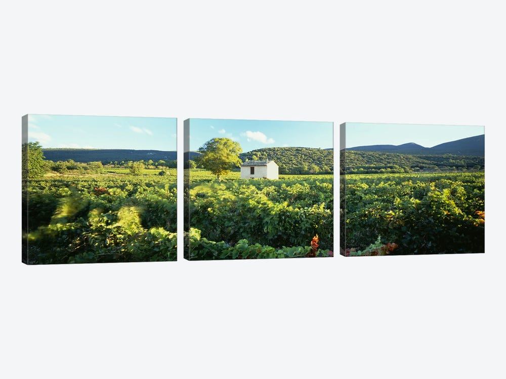 Vineyard Provence France by Panoramic Images 3-piece Canvas Print