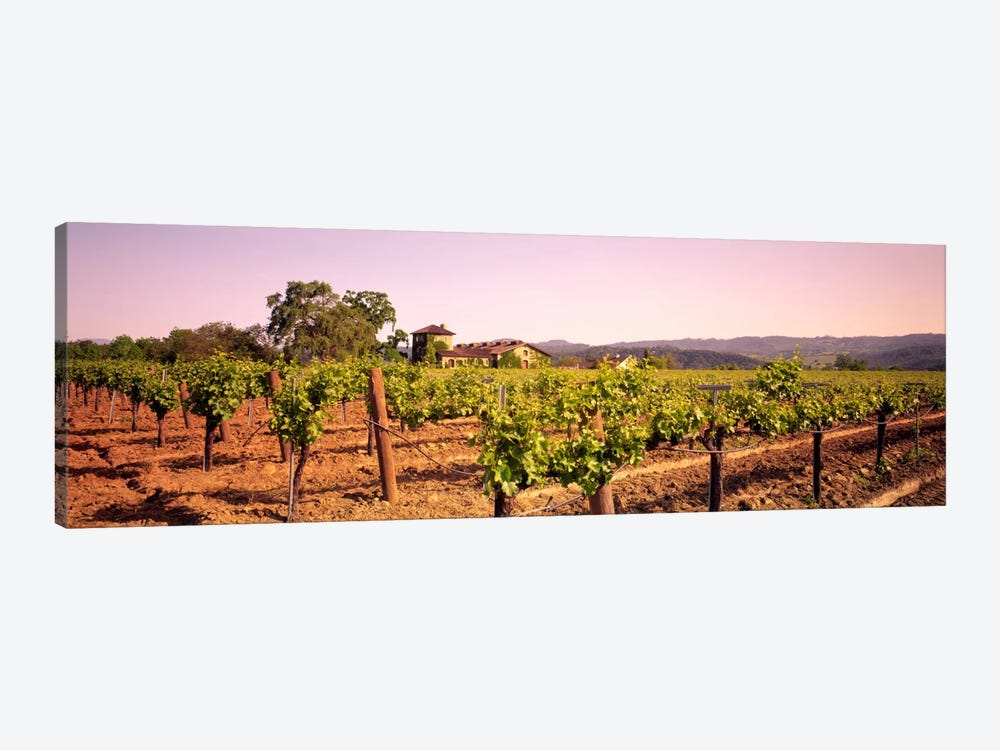 Sattui Winery, St. Helena, Napa Valley, California, USA by Panoramic Images 1-piece Canvas Art