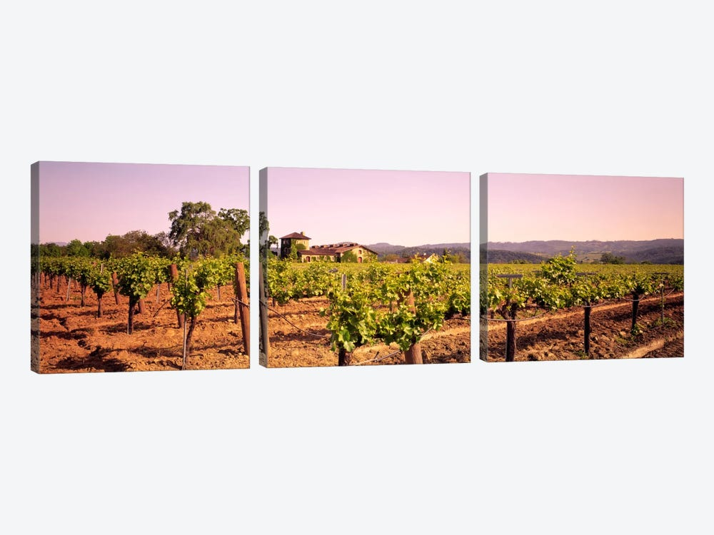 Sattui Winery, St. Helena, Napa Valley, California, USA by Panoramic Images 3-piece Canvas Art