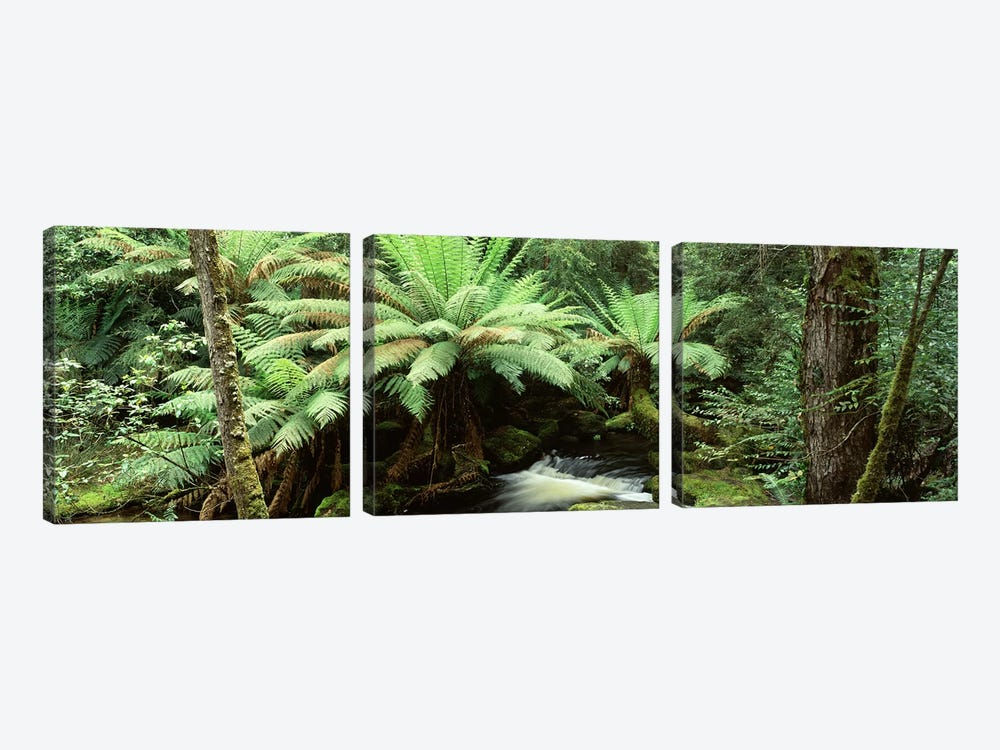 Rainforest Landscape, Mount Field National Park, Tasmania, Australia by Panoramic Images 3-piece Canvas Wall Art