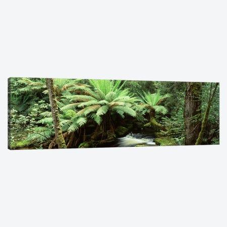 Rainforest Landscape, Mount Field National Park, Tasmania, Australia Canvas Print #PIM4504} by Panoramic Images Canvas Print