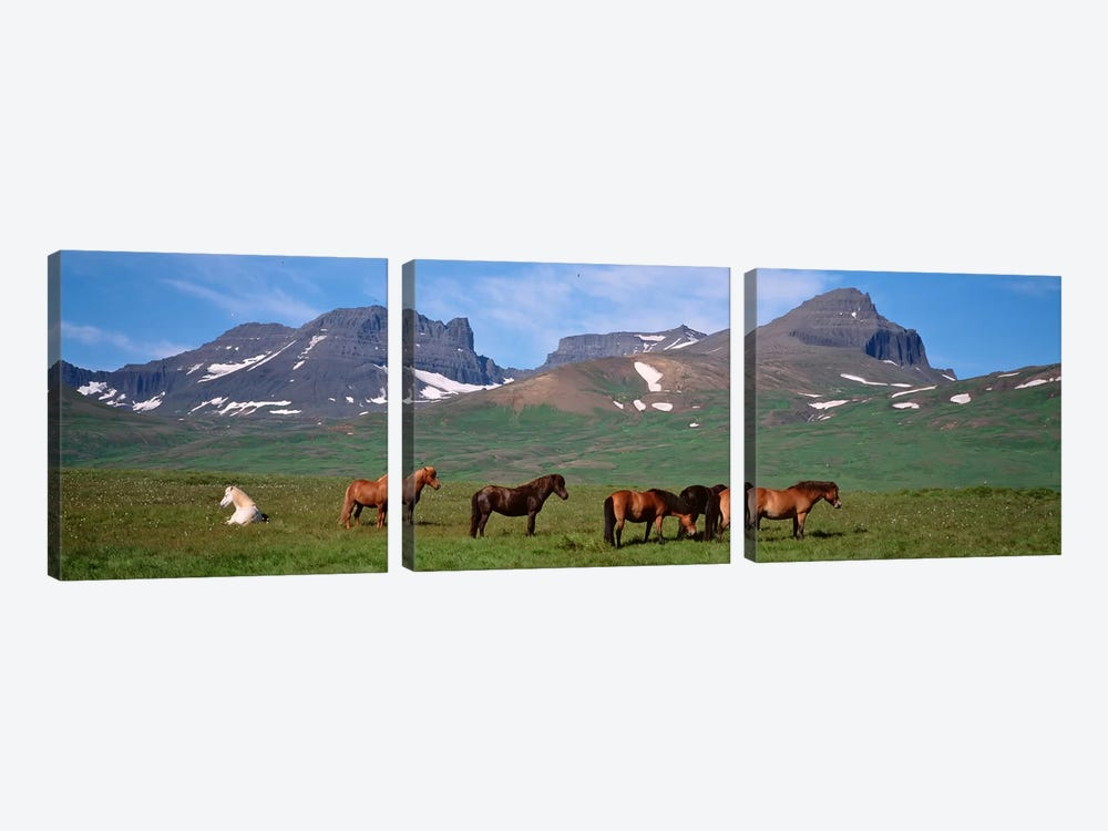 Horses Standing And Grazing In A Meadow, Borgarfjordur, Iceland by Panoramic Images 3-piece Canvas Art Print