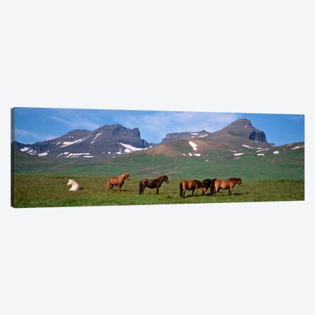 Horses Standing And Grazing In A Meadow, Borgarfjordur, Iceland Canvas Print #PIM4538} by Panoramic Images Art Print