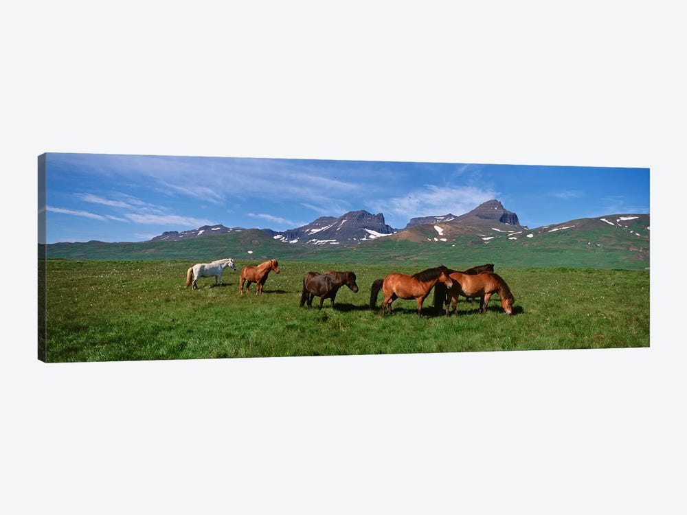 Horses Standing And Grazing In A Meadow, Borgarfjordur, Iceland #2 by Panoramic Images 1-piece Canvas Artwork