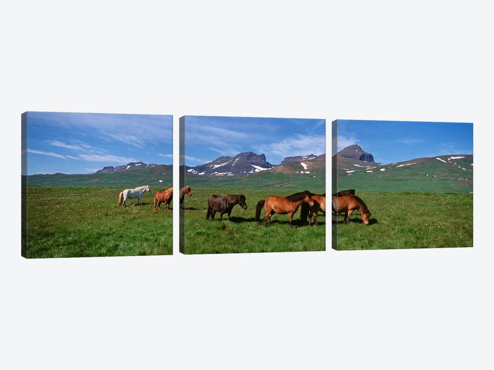 Horses Standing And Grazing In A Meadow, Borgarfjordur, Iceland #2 by Panoramic Images 3-piece Canvas Wall Art