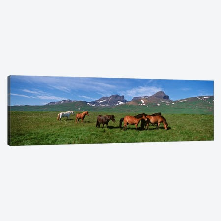 Horses Standing And Grazing In A Meadow, Borgarfjordur, Iceland #2 Canvas Print #PIM4539} by Panoramic Images Canvas Print