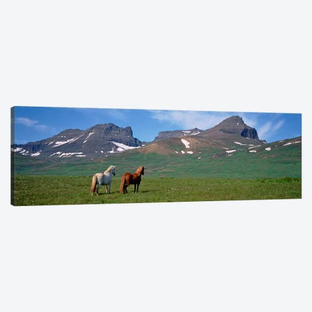Horses Standing And Grazing In A Meadow, Borgarfjordur, Iceland #3 Canvas Print #PIM4540} by Panoramic Images Canvas Artwork