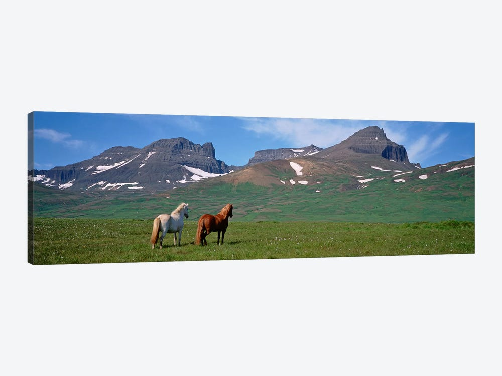 Horses Standing And Grazing In A Meadow, Borgarfjordur, Iceland #3 1-piece Canvas Art
