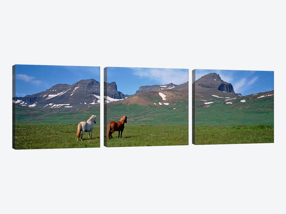 Horses Standing And Grazing In A Meadow, Borgarfjordur, Iceland #3 by Panoramic Images 3-piece Canvas Artwork