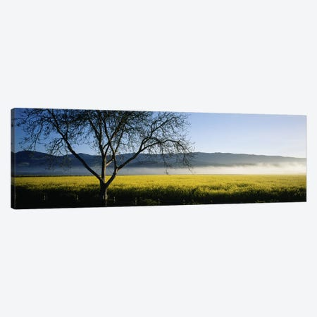 A Distant Fog, Napa Valley, California, USA Canvas Print #PIM4612} by Panoramic Images Canvas Art