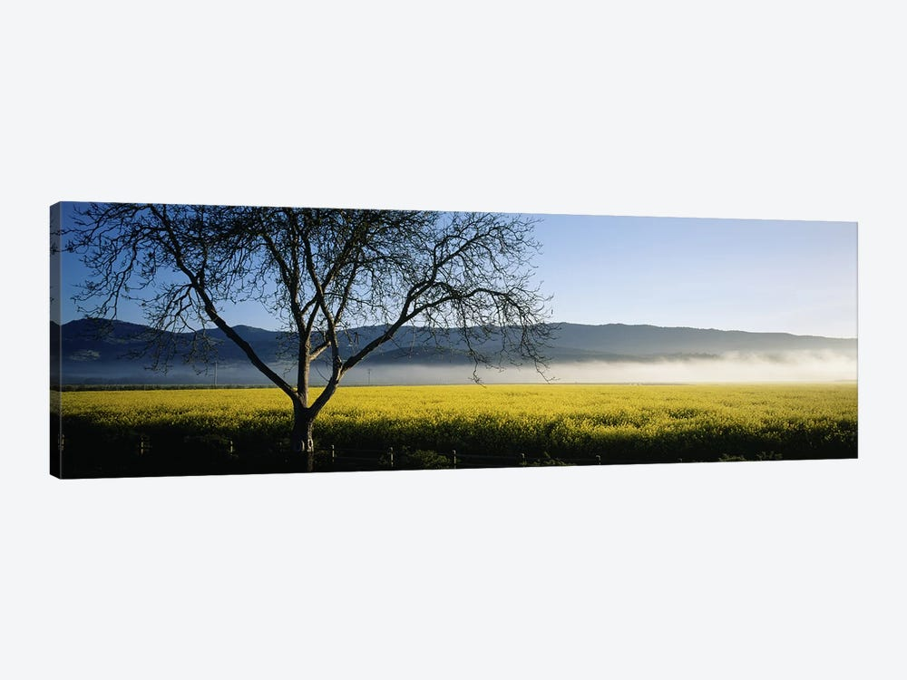 A Distant Fog, Napa Valley, California, USA by Panoramic Images 1-piece Canvas Print