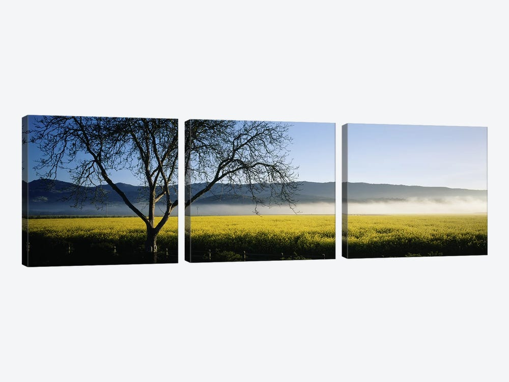 A Distant Fog, Napa Valley, California, USA by Panoramic Images 3-piece Canvas Art Print
