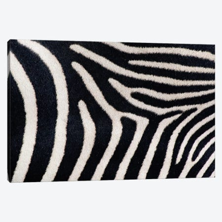 Close-up of Greveys zebra stripes Canvas Print #PIM4614} by Panoramic Images Canvas Art Print