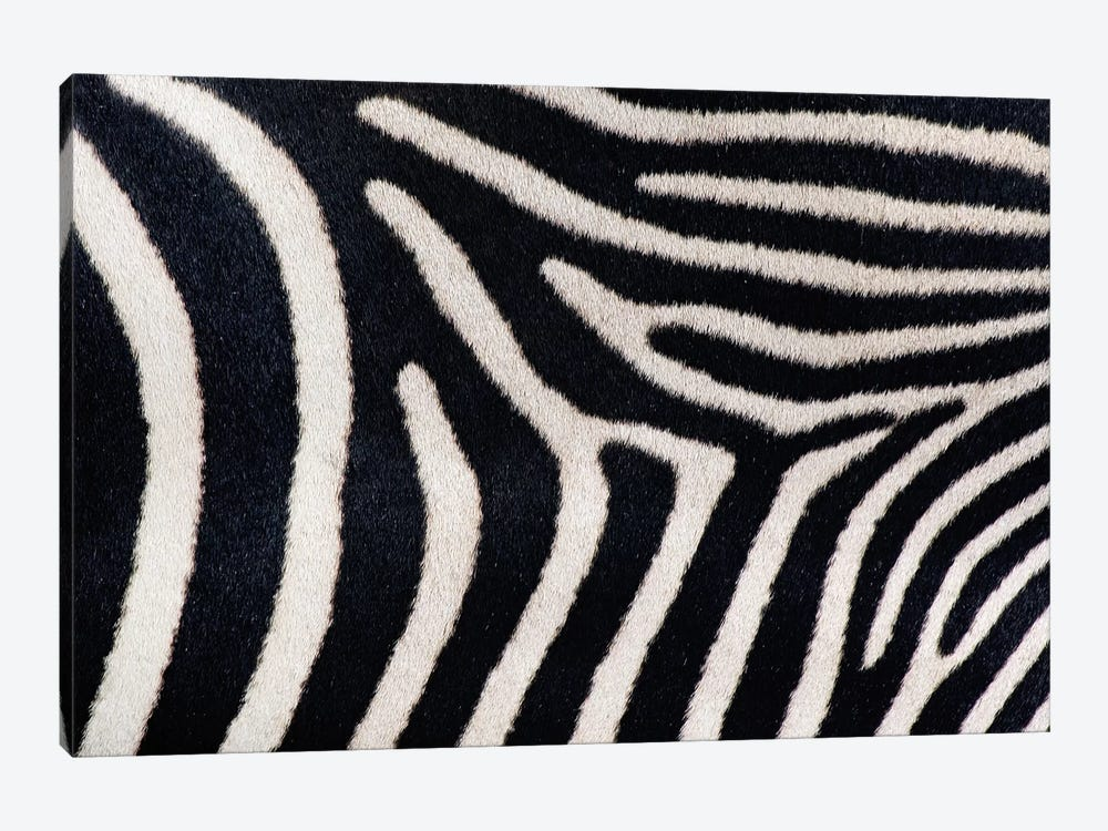 Close-up of Greveys zebra stripes by Panoramic Images 1-piece Canvas Print