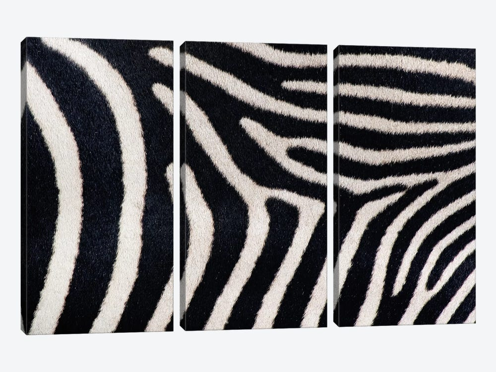 Close-up of Greveys zebra stripes by Panoramic Images 3-piece Art Print
