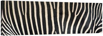 Grevey's Zebra Stripes Canvas Art Print