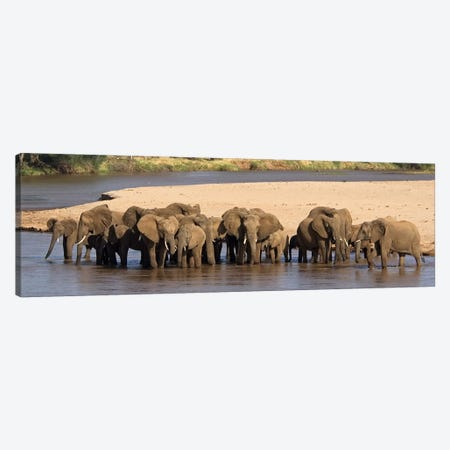 Herd of African elephants at a river Canvas Print #PIM4617} by Panoramic Images Art Print