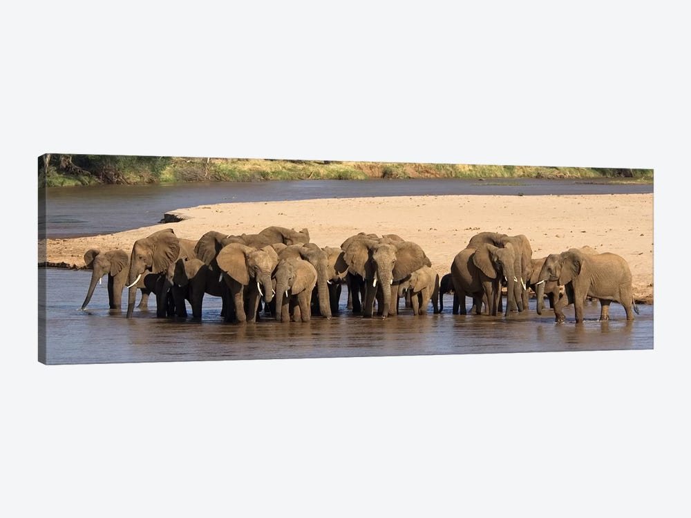 Herd of African elephants at a river by Panoramic Images 1-piece Canvas Art
