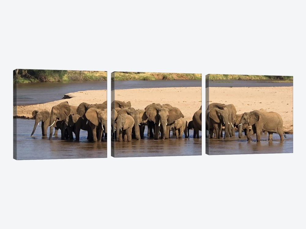 Herd of African elephants at a river by Panoramic Images 3-piece Canvas Art