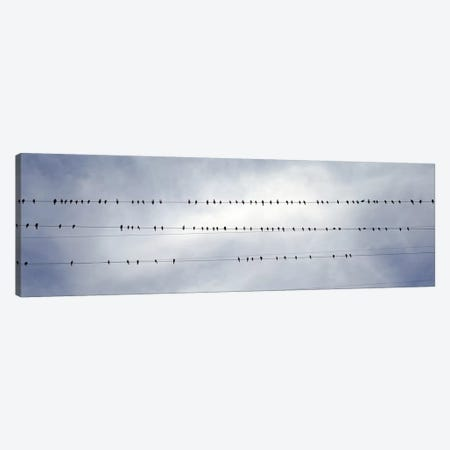 USACalifornia, Flock of birds sitting on power line Canvas Print #PIM4648} by Panoramic Images Art Print