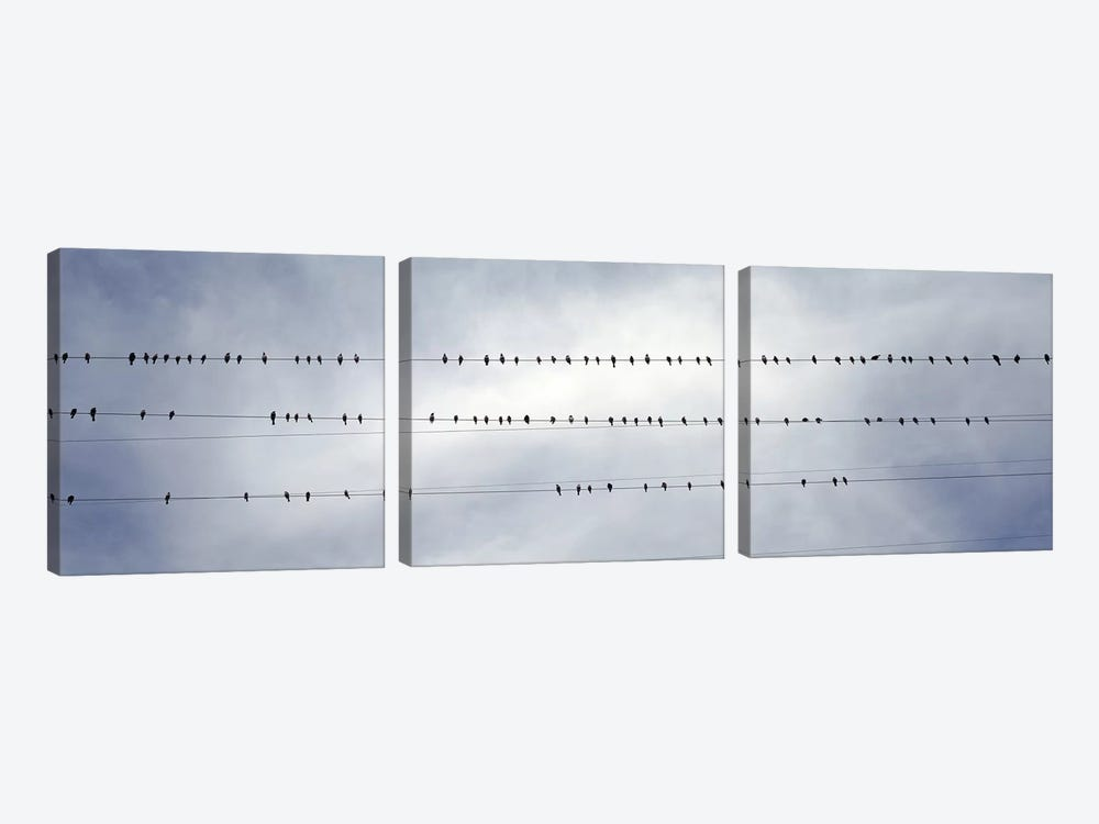 USACalifornia, Flock of birds sitting on power line by Panoramic Images 3-piece Canvas Artwork