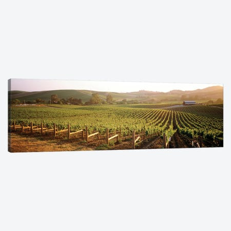 Vineyard Landscape, Los Carneros AVA, Napa Valley, California, USA Canvas Print #PIM4703} by Panoramic Images Canvas Artwork