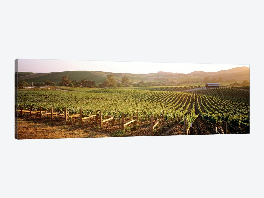 Vineyard Landscape, Los Carneros AVA, Napa Valley, California, USA by Panoramic Images 1-piece Canvas Art