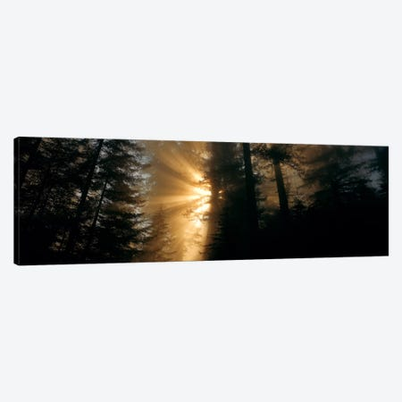 Crepuscular (God) Rays, Redwood National And State Parks, California, USA Canvas Print #PIM474} by Panoramic Images Canvas Artwork