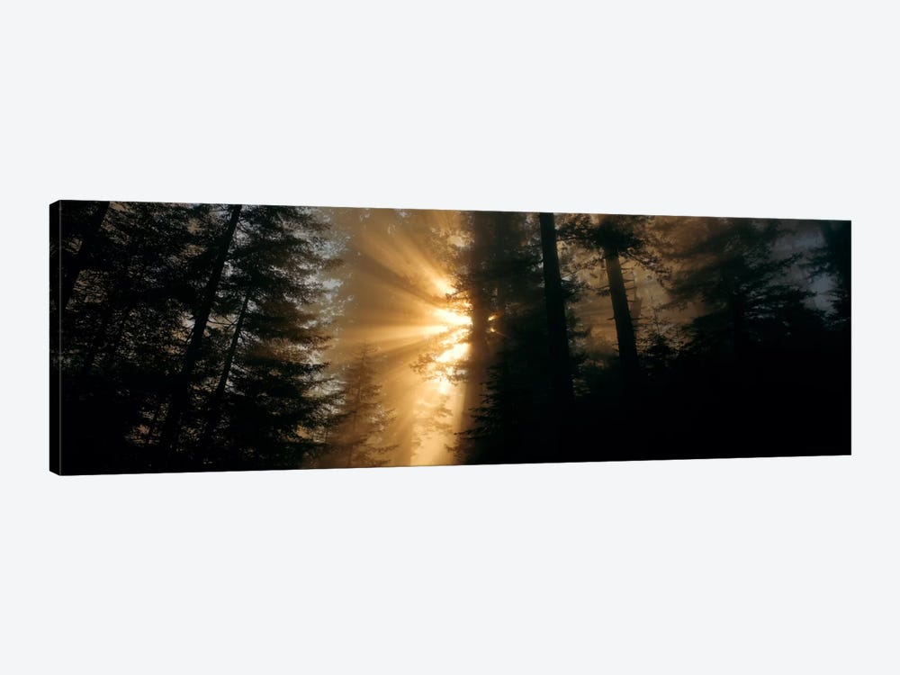 Crepuscular (God) Rays, Redwood National And State Parks, California, USA 1-piece Canvas Wall Art