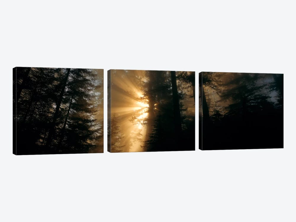 Crepuscular (God) Rays, Redwood National And State Parks, California, USA 3-piece Canvas Wall Art