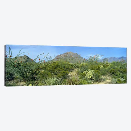 Mountainous Desert Landscape, Big Bend National Park, Texas, USA Canvas Print #PIM4760} by Panoramic Images Canvas Wall Art