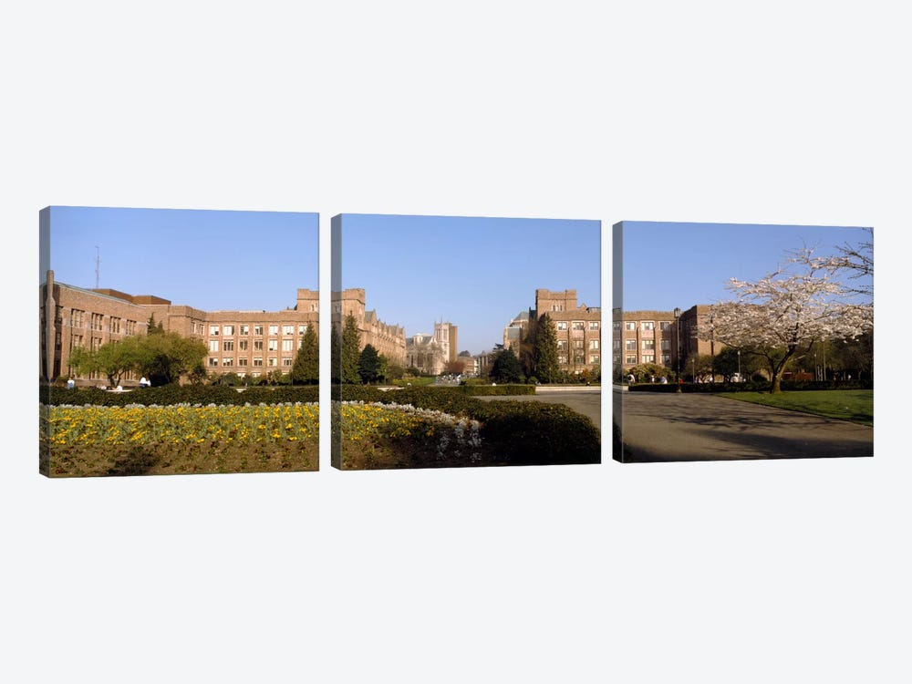 Trees in the lawn of a university, University of Washington, Seattle, King County, Washington State, USA by Panoramic Images 3-piece Canvas Wall Art