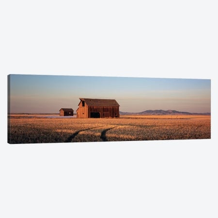 Old Barn In A Wheatfield, Hobson, Judith Basin County, Montana, USA Canvas Print #PIM4820} by Panoramic Images Canvas Print