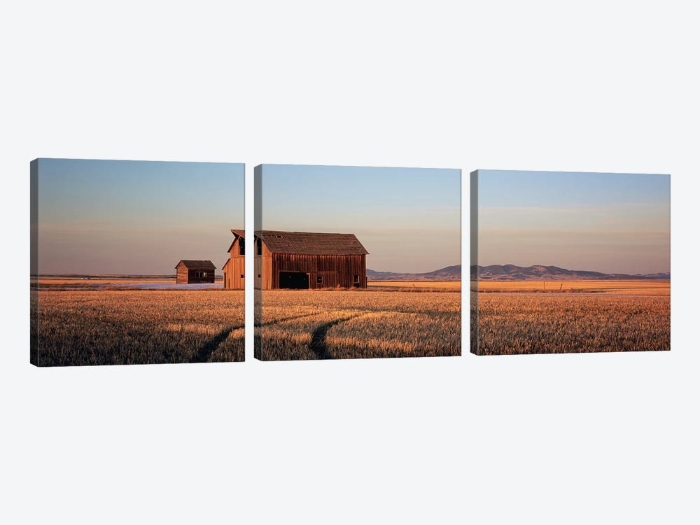 Old Barn In A Wheatfield, Hobson, Judith Basin County, Montana, USA by Panoramic Images 3-piece Art Print