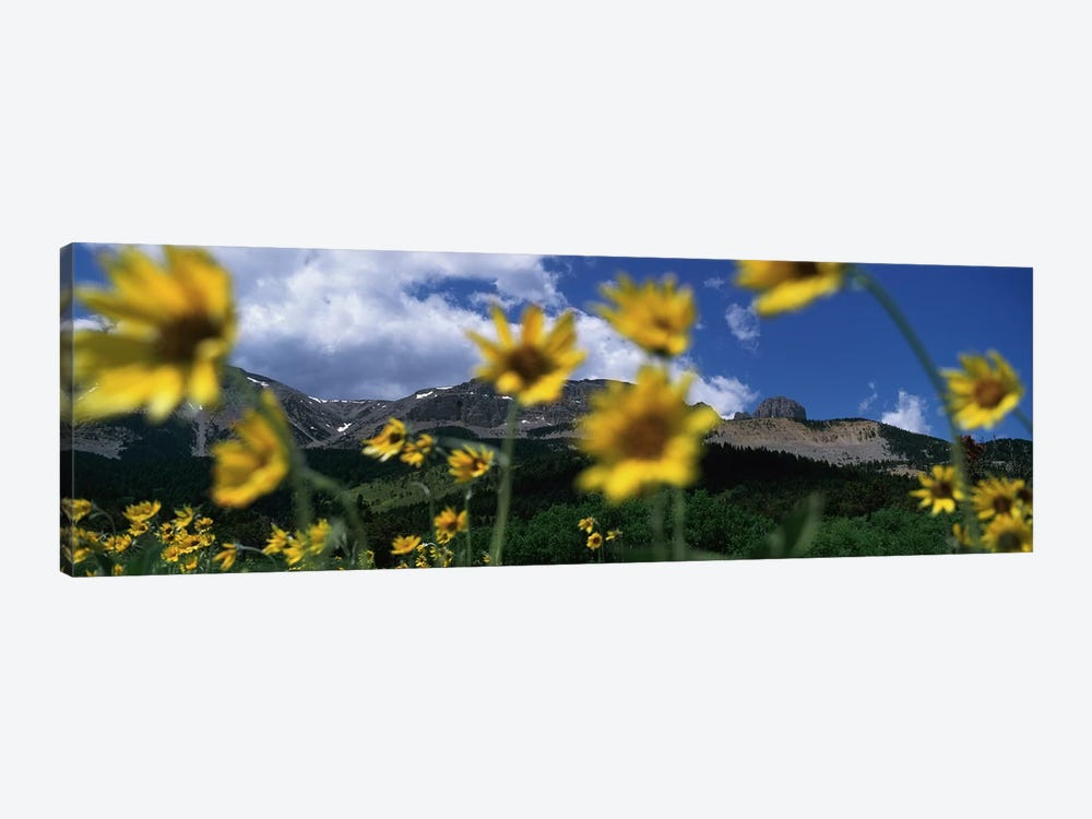 Mountain Landscape Behind Out Of Focus Wildflowers, Montana, USA by Panoramic Images 1-piece Canvas Art Print