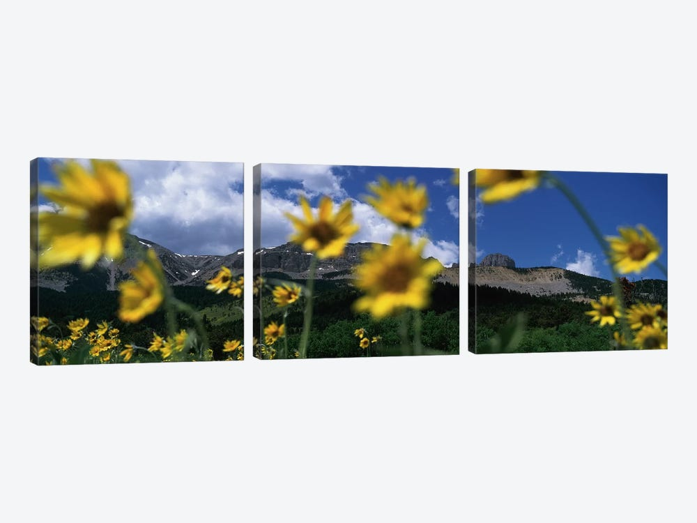 Mountain Landscape Behind Out Of Focus Wildflowers, Montana, USA by Panoramic Images 3-piece Canvas Art Print