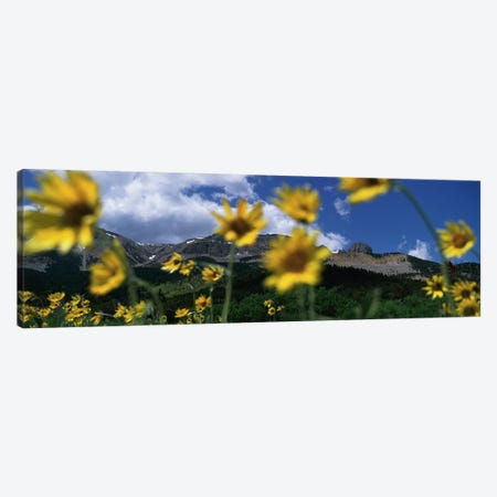 Mountain Landscape Behind Out Of Focus Wildflowers, Montana, USA Canvas Print #PIM4822} by Panoramic Images Canvas Print