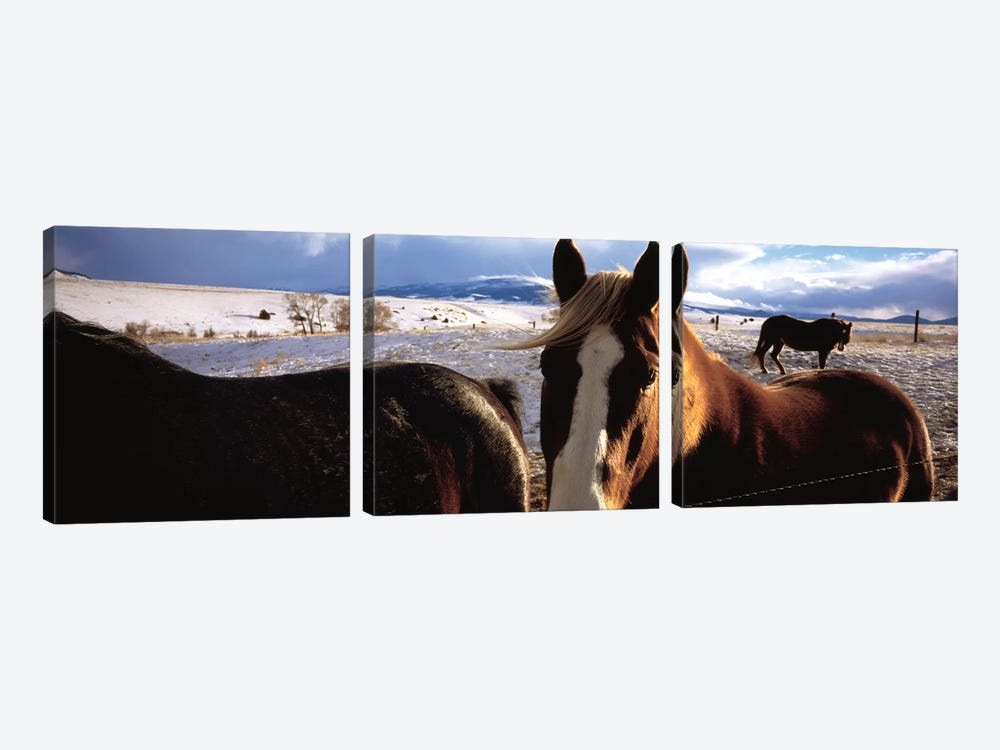 Horses in a field, Montana, USA by Panoramic Images 3-piece Canvas Print