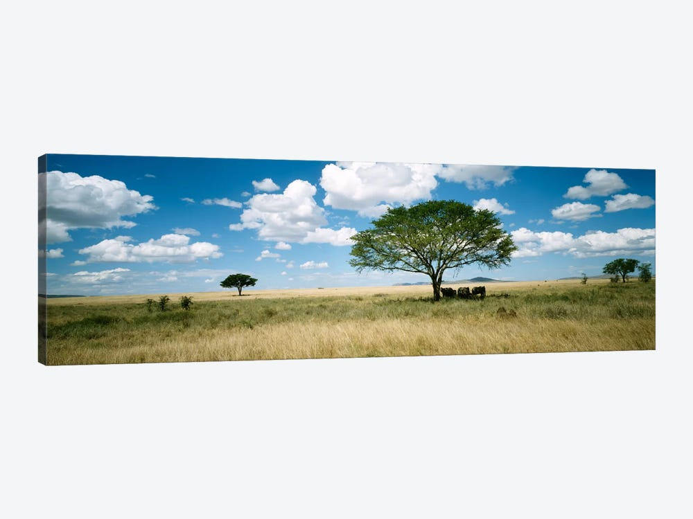 Grazing Elephants Under A Tree, Tsavo West National Park, Tsavo Conservation Area, Kenya by Panoramic Images 1-piece Art Print