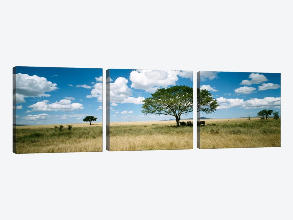 Grazing Elephants Under A Tree, Tsavo West National Park, Tsavo Conservation Area, Kenya by Panoramic Images 3-piece Canvas Art Print