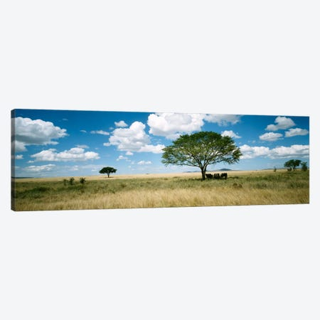 Grazing Elephants Under A Tree, Tsavo West National Park, Tsavo Conservation Area, Kenya Canvas Print #PIM482} by Panoramic Images Canvas Artwork
